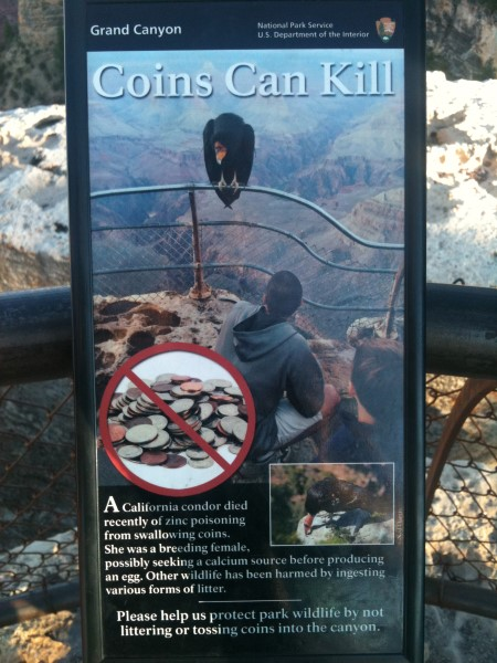 Las monedas pueden matar condors