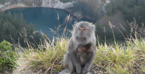 El tercer lago y los monos