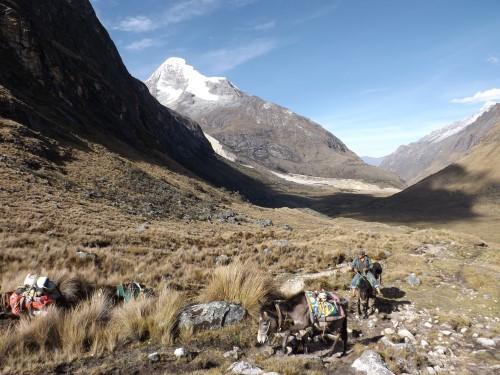 Nuestros burros cargando nuestro material por la quebrada de Santa Cruz
