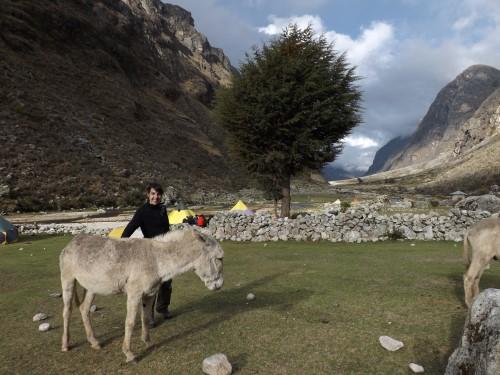 Jugando con uno de nuestros burros