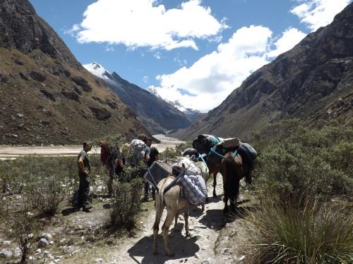 Nuestros burros cargando nuestras cosas